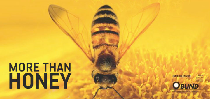 "Filmtipp ""More than Honey"""